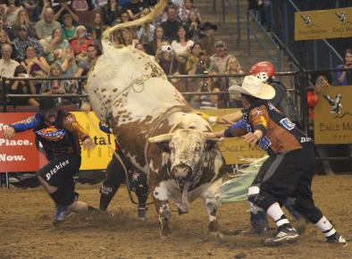 Professional bullriding  comes to Bakersfield