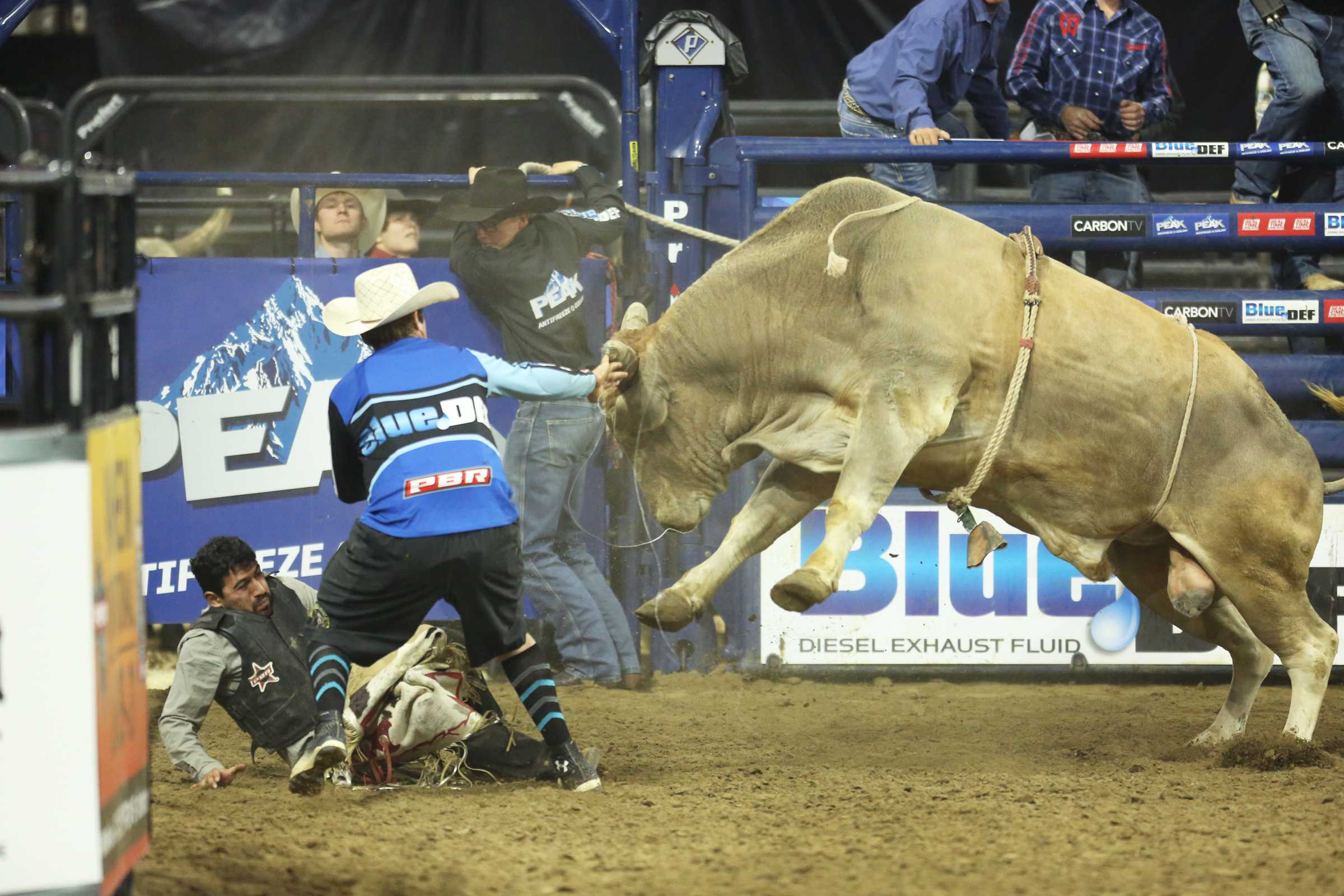 A bull rider at the PBR event narrowly dodges injury as one of the brave bull fighters gets in between to distract the bull and give the rider a chance to escape.