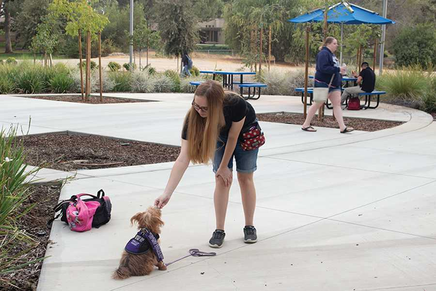 New campus policy prepares to welcome emotional support animals